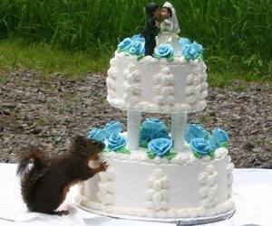 squirrel and wedding cake image