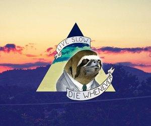 live and sloth image