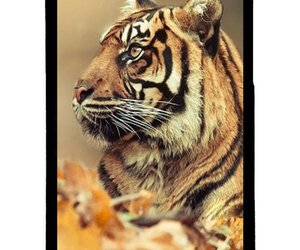good, style, and tiger image