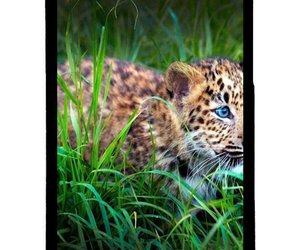good, style, and iphone 5c phone case image