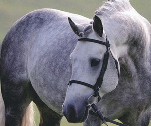 grey and horse image
