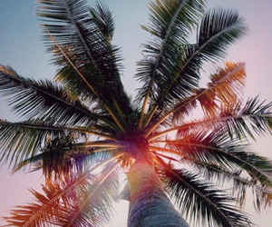 summer, palm tree, and sun image