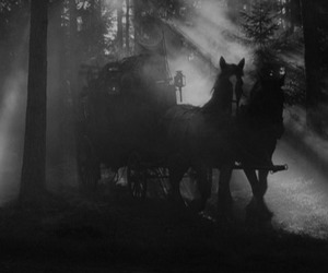 coach, dark, and forest image