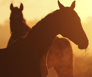 animals, horse, and horses image