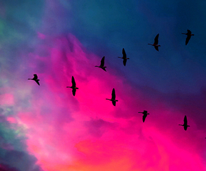 bird, sky, and pink image
