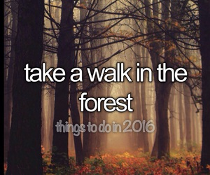 forest, nature, and walk in the forest image