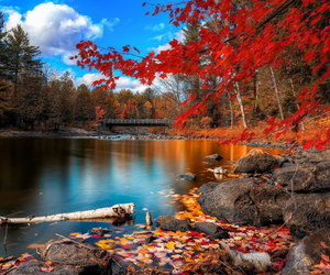 fall, foliage, and forest image