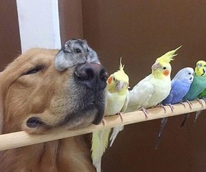 dog, animal, and bird image