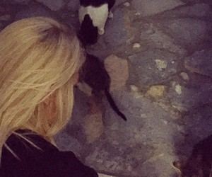 blonde, girl, and cats image