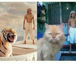 funny, cat, and Life of Pi image