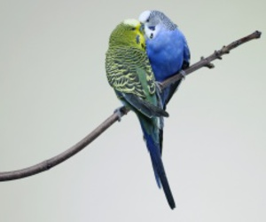 animals, birds, and cute image