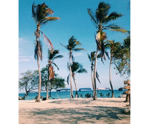 beach, Hot, and palm trees image