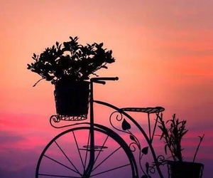 flowers, sunset, and bike image