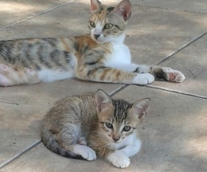 cats, beautiful cats, and new family image
