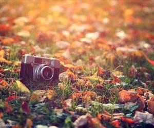camera, autumn, and fall image