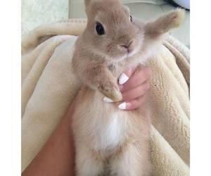 adorable, aww, and bunny image
