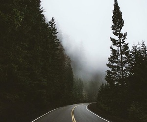 forest, fog, and road image