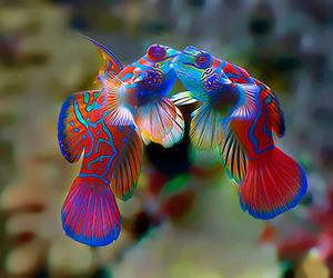 fish and kiss image