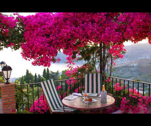 flower, bougainvillea, and flowers image