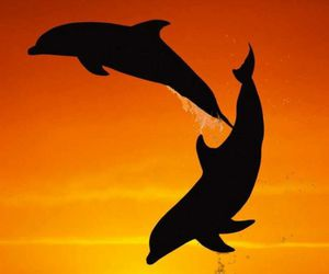 dolphin, ocean, and sunset image