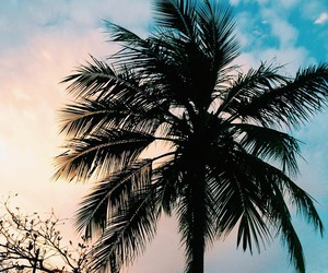 beautiful, palms, and trees image
