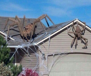 australia, spiders, and funny pictures image