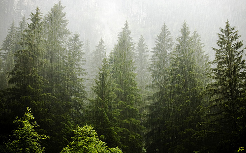 forest, rain, and tree image
