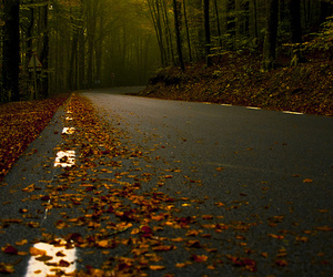 road, autumn, and leaves image