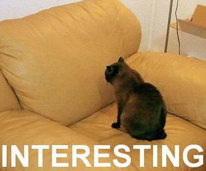 cat, interesting, and funny image