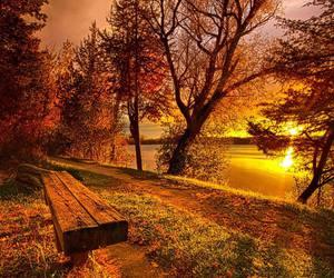 nature, autumn, and sunset image