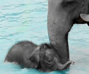 animal, animals, and baby image