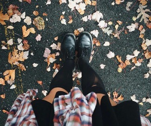 autumn, inspo, and leaves image