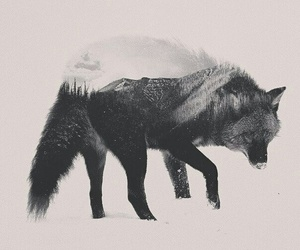 mountains and wolf image
