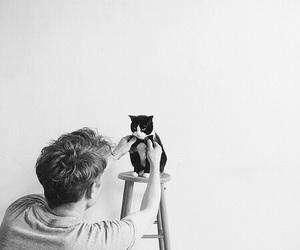 cat, boy, and animal image