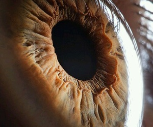 eye, eyes, and brown image