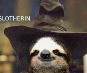 sloth, harry potter, and funny image