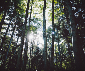 forest, nature, and summer image