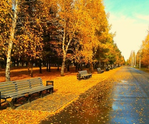 autumn, bench, and road image