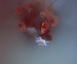 flowers, water, and indie image