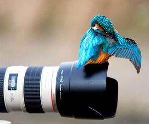 bird, camera, and photography image