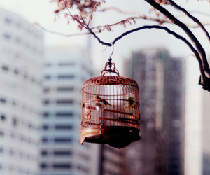 bird, cage, and photography image