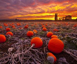 pumpkin, autumn, and orange image