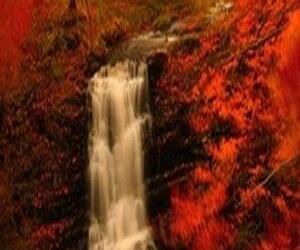 tree, fall, and leaf image
