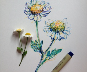 art, daisy, and drawing image