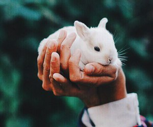 rabbit, cute, and animal image