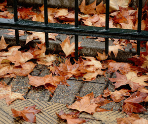 autumn, Herbst, and leaves image