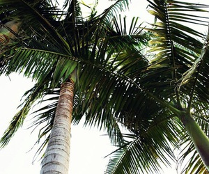 palm tree, summer, and travel image