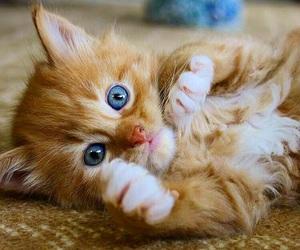 adorable, animal, and blue eye image
