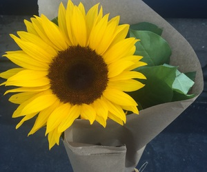 pretty and sunflower image