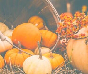 autumn, white, and bright image